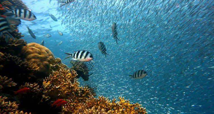 Best Underwater Fishing Camera REVIEWS